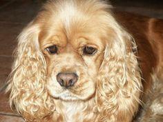 Mowgli mon chien