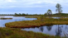 Puurijärven ja Isosuon kansallispuisto – suota, lintuja ja ...