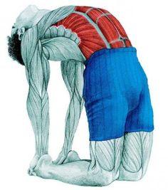 Анатомия стретчинга: поза верблюда
