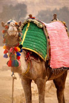Sometimes camels just look so happy... #JetsetterCurator