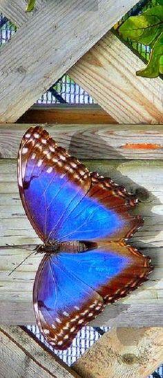 Butterfly on Board