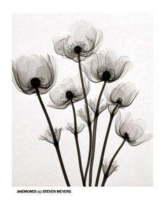 (101) Flowers Under X-Ray - design-dautore.com