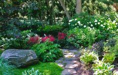 Shade garden- with colour