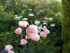 herbaceous perennials : The late afternoon Border