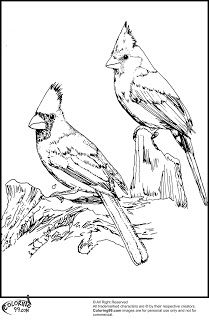 Two Red Cardinals coloring page SuperColoringcom coloring