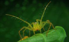 Macro Photographies par Jimmy Kong : Des Araignées au Regard Captivant