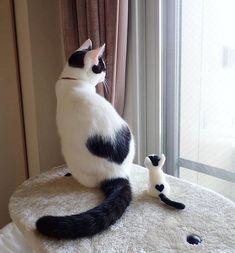 Cute Cats Images Hd Cute Kittens Being Born Cute Cats And Kittens, I Love Cats, Crazy Cats, Kittens Cutest, Super Cute Kittens, Pretty Cats, Beautiful Cats, Animals Beautiful, Beautiful Flowers
