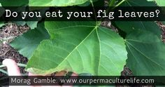 Morag Gamble blogs about permaculture in the home, garden and community.