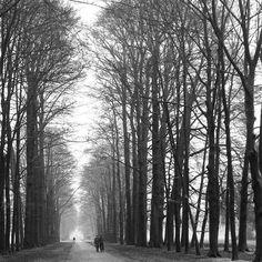 De weg naar Paleis het Loo 📷  #apeldoorn #mooiapeldoorn #angelinedobberfotografie #myhometown #veluwe #gelderland #holland #wanderlust #ig_discover_holland #apeldoorncity #visitapeldoorn #super_holland  #geldersestreken #buitengewoon_gld  #tree_magic #dutch_connextion #natuurfotografie #naturephotography #landschap #landscape  #zwartwitfotografie #zwartwit_nl #blackandwhitephotography #bnw_one #love_bnw  #paleishetloo #rsa_bnw #bnw_greatshots #instaveluwe #visitveluwe