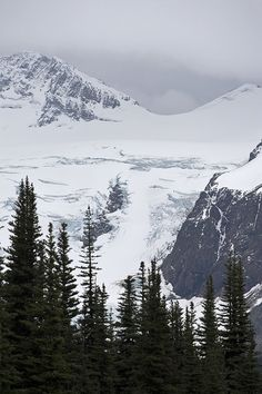 Overlord/Decker Hiking Trail - Blackcomb Mnt - Whistler BC by millardog, via Flickr #whistler