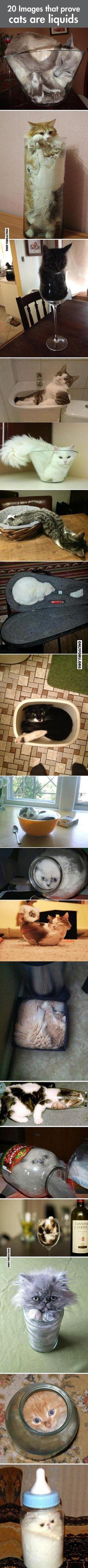 Some images that prove cats are liquids - #OnlyForU, #funny, #lol, #fun, #humor, #rofl, #gif, #troll, #comics, #meme, #gags, #new, #lol pics, #lol gifs, #Funny pics, #Funny gifs,