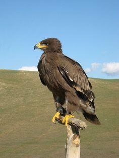 Wonderful Mongolia - http://www.travelandtransitions.com/destinations/destination-advice/asia/