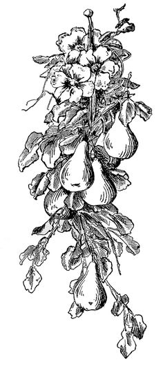 Vintage Clip Art - Lemon and Pear Garlands - The Graphics Fairy
