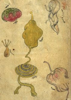 Anonymous Persian Anatomical Illustrations