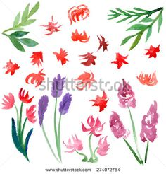 Hand-painting watercolor  floral set, Isolated on white background. Vector illustration