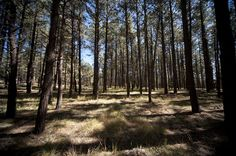 Forest off Route 126 near Cuba, NM
