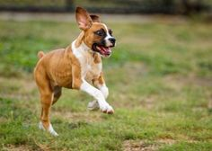 Benefits of having a playful dog