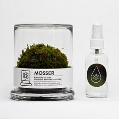 Mosser is a small glass terrarium filled with a simple round moss ball crafted by NY based designers Jennica Johnstone and Noah Atkinson