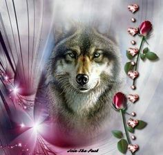 Wolf Images, Wolf Photos, Wolf Pictures, Fantasy Wolf, Fantasy Art, Wolf Tattoos For Women, Indian Wolf, Native American Wolf, Wolf Artwork
