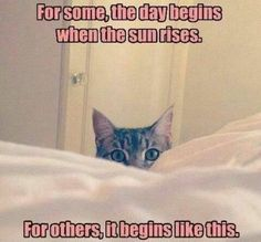 Like clockwork - LOLcats is the best place to find and submit funny cat memes and other silly cat materials to share with the world. We find the funny cats that make you LOL so that you don't have to. Funny Animal Memes, Funny Cats, Funny Animals, Cute Animals, Animal Humor, Wild Animals, Funny Cat Photos, Funny Animal Pictures, Adorable Pictures