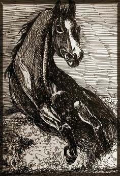 Horse sketch one