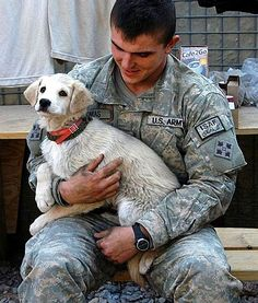 Dogs And Cats With Soldiers