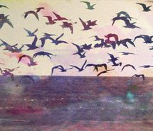 birds and skies