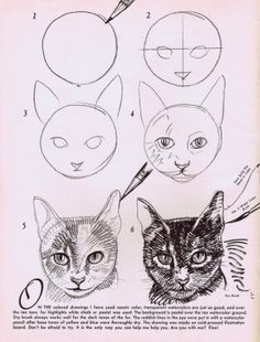 Animals Drawing How to draw cats step by step drawing tutorial. Drawing Lessons, Drawing Techniques, Drawing Tips, Drawing Process, Realistic Drawings, Drawing Sketches, Sketching, Face Sketch, Drawing Faces