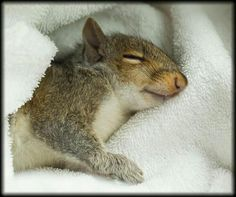 He's dreaming of nuts