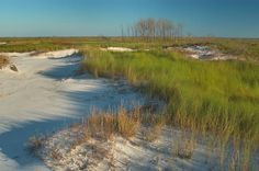 Ship Island - Mississippi  Fun Road Trip idea! For People living in the south! There is a ferry that takes you to the island from the MS coast!