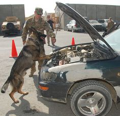 Military Working Dogs  search vehicles at 401st AFSB August 25