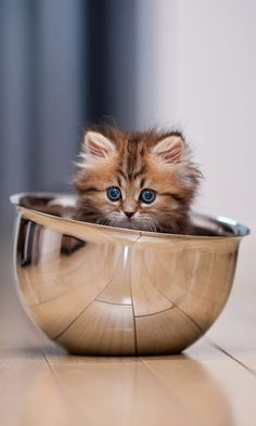 Cute cat 🐈 - Indian hot and sexy girls Baby Kittens, Cute Cats And Kittens, Kittens Cutest, Ragdoll Kittens, Bengal Cats, White Kittens, Siamese Cats, Beautiful Cats, Animals Beautiful