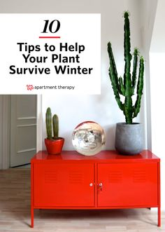 10 easy tips to keep your plants healthy all year long, especially in the winter. You're not the only one struggling to make it through the harshest months of the year—your houseplants are also busy dodging drafts and soaking up every last ray of dwindling sunlight. To give your ferns and fiddle leaf figs a fighting chance at survival, follow these ten tips for winter plant care (then keep your fingers crossed that spring comes early this year).