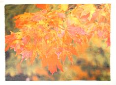 Title: Arbor 5 … An Autumn Cascade of sugar maple leaves. From a photo of a tree just outside my front window.