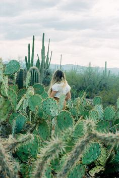 Walking through a field of cactus and succulents Cacti And Succulents, Cactus Plants, Cacti Garden, Cactus E Suculentas, The Secret Garden, Plants Are Friends, Mario Testino, All Nature, Adventure Is Out There