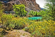 Flowers bloom! Whitewater Preserve, Golf Courses, Waterfall, Road Trip, Bloom, Flowers, Outdoor, Outdoors, Road Trips