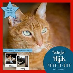 For the past 15 years Rijiks been as cuddly and loving as day 1 and we cant picture our lives without him. His favorite activities include sleeping on his humans lap purring under the covers laying under the sun and massaging his humans @zee622  with his paws. Vote right meow! http://ift.tt/1P29vGs #365Cats #petsofpageaday #CatsofInstagram #Catstagram #Cat #Kitty #InstaCat #Instagood #InstaPet #PetLovers #ilovemycat #crazycatlady #mycat #cutecat #catlover #catoftheday #petcontest…