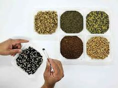 TEXAS READY has an heirloom seed bank especially designed to grow in your region! Each of our seed kits contain over 80 open-pollinated varieties of non hybrid, non-GMO seed all personally selected for the bountiful home-grown production of tasty and nutritious vegetables, herbs, fruits and grains. http://www.texasready.net/ piease visit our sites.