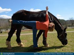 """Anywhere #Yoga Contest: """"You, Yoga & A Horse...what could be better ~  Half Moon with Lena."""""""