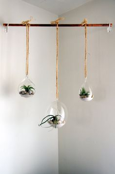Cool Hanging Terrariums: Catherine and Lionel's Colorful, Thrifty Toronto Home