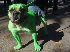 Hulk Dog Smash! Let's make sure this guy gets his treat. (via The Social Newspaper)