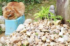 Uma gata visita o túmulo do seu dono, que morreu há dois anos, todos os dias - GreenMe Brasil Plants, Animals, Kittens And Puppies, Loom Animals, Pets, Gatos, Animales, Animaux, Plant
