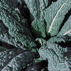 Kale, Lacinato Organic   Seed Savers Exchange
