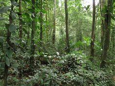Acampamento Selvagem 03, 04, 05/10/2015 Fisionomia: Floresta Ombrófila Densa Sub Montana (entre 50m e 500m). Local: Duque de Caxias/RJ.