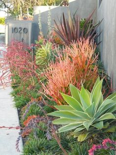 Love the oranges and greens in this succulent cactus garden ...