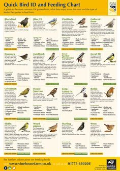 Quick Bird ID and Feeding Chart Infographic #birdchart #birdfood #birdfeeding #UKBirds http://www.vinehousefarm.co.uk/ vhfbirdidchart.jpg (1206×1713) http://www.vinehousefarm.co.uk/downloads/vhfbirdidchart.jpg #gardengoodies