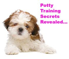 Want to learn a few puppy potty training secrets? Learn these and many other dog training tips using these hands-off methods. Click here to read more>> http://www.dog-names-and-more.com/hands-off-dog-training.html