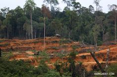 U.S. govt puts financial muscle behind REDD+ forest carbon conservation projects