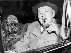 Winston Churchill owned two brown miniature poodles, both named Rufus.    Rufus ate in the dining room with the rest of the Churchill family. A cloth was laid for him on the Persian carpet beside the head of the household, and no one else ate until the butler had served Rufus's meal.