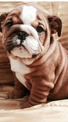 So many fluffin wrinkles!